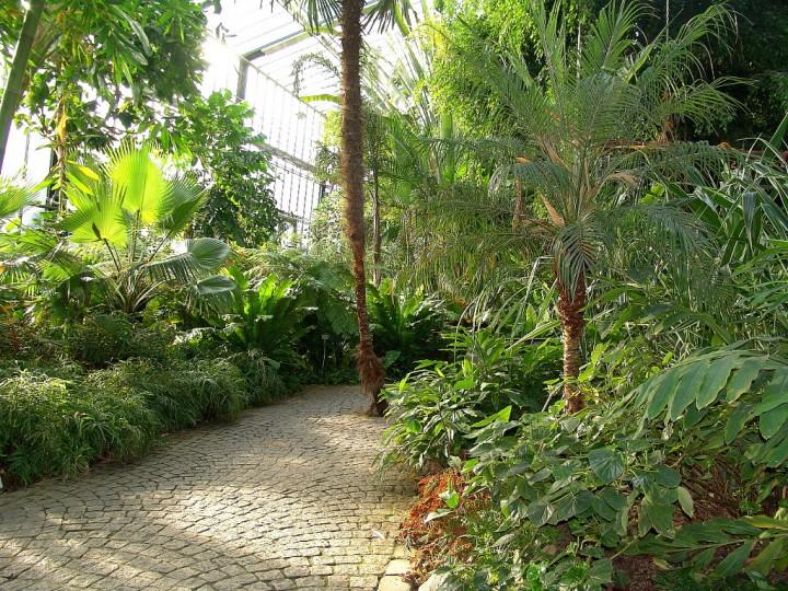 Dschungel_mit_Weg