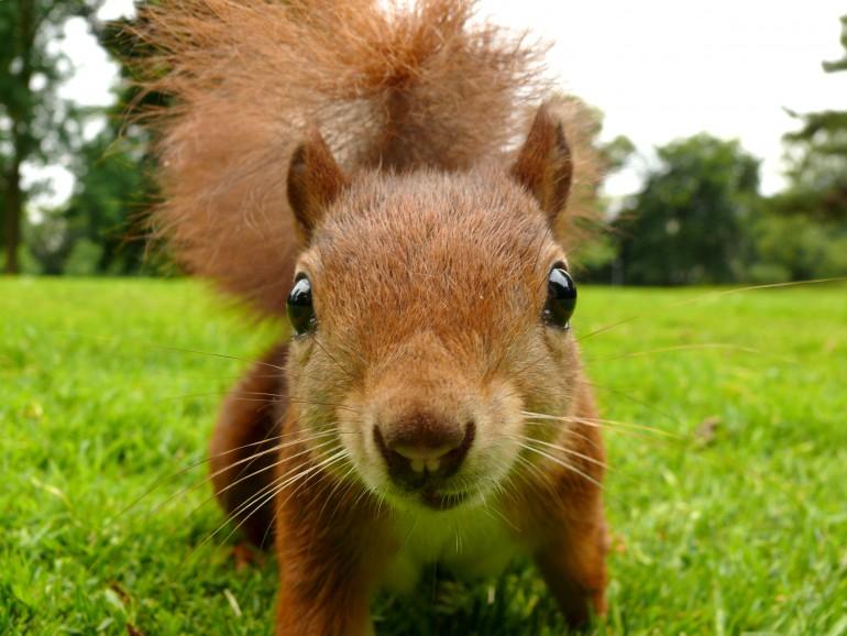 Eichhörnchen_Jo_Fröhner